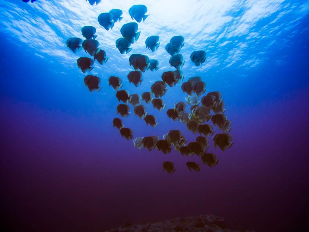 Diving Mauritius